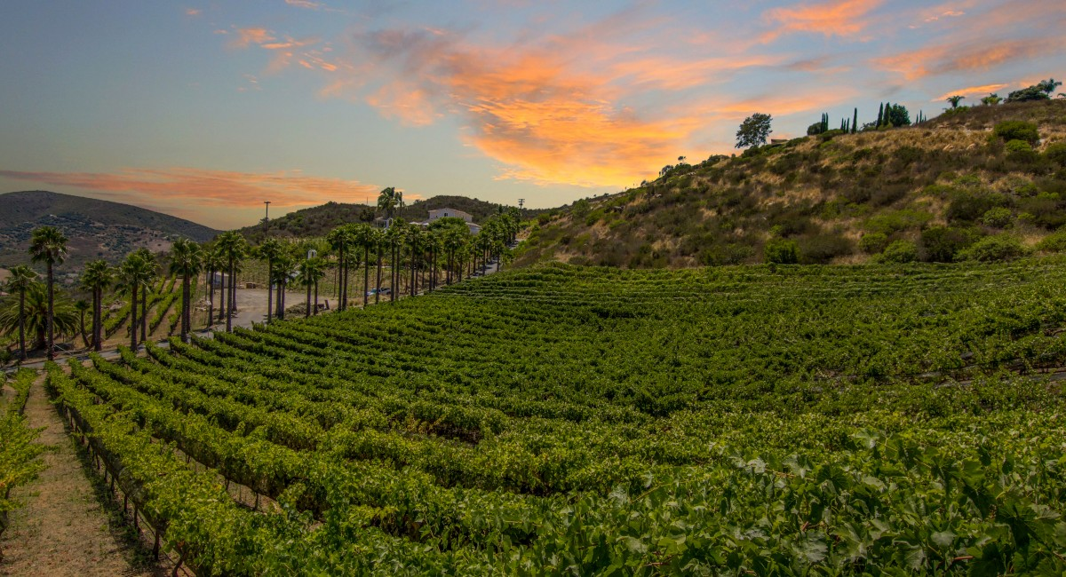 2285 Sunshine Mountain Road, San Marcos, CA 92069 Image #19